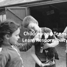 The Farm Teaches Responsibility Slideshow